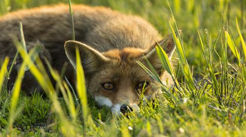 Die neue Wildnis – Große Natur in einem kleinen Land